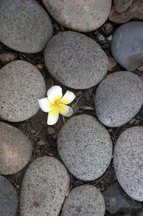 Photographer Photograph - Flora Manila 3 by Jez C Self