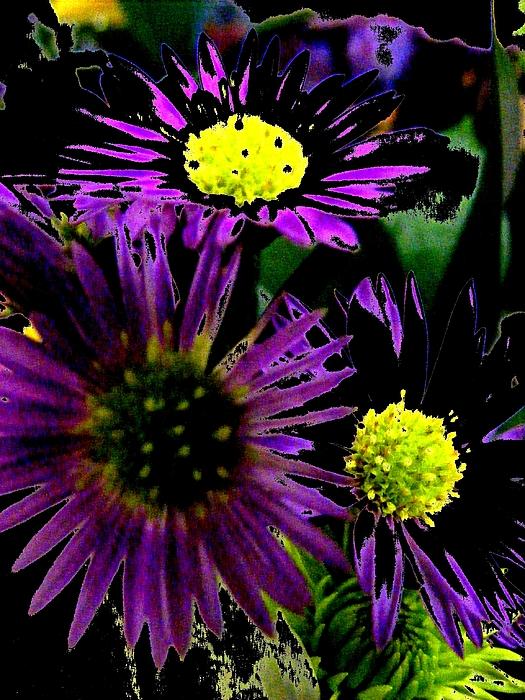 New Digital Art - Floral 81 by Chuck Landskroner