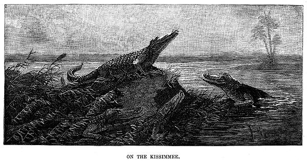 1886 Photograph - Florida Alligators, 1886 by Granger