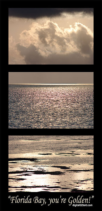 Florida Bay You Are Golden Decorated Reality Photograph by Flex Maslan Decorated Reality