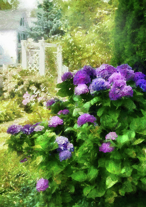 Hdr Photograph - Flower - Hydrangea - Lovely Hydrangea  by Mike Savad