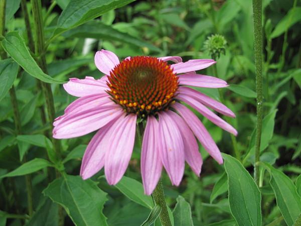 Flower Photograph - Flower 1 by Jason Moore