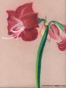 Flower Drawing by Amber Fain