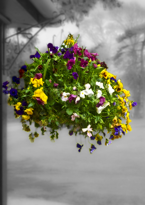 Nature Photograph - Flower Basket by Svetlana Sewell