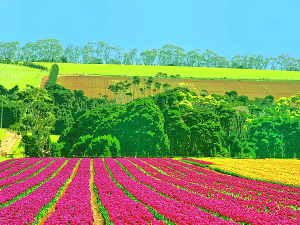 Flower Farm Mixed Media - Flower Farm And Hills by Dominic Piperata