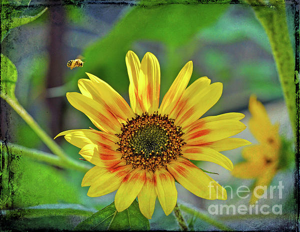 Flower Photograph - Flower Of The Sun by Kerri Farley