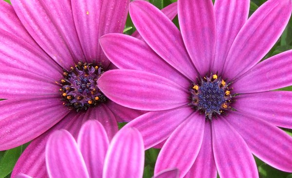 Pink Photograph - Flower Of Vivacity by Deborah Brewer
