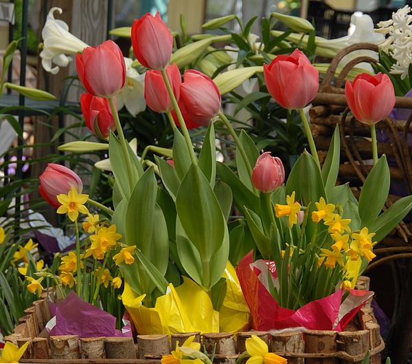 Tulips Photograph - Flowers 117 by Joyce StJames