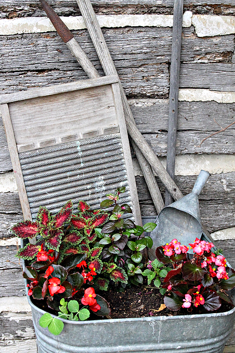Rural Photograph - Flowers And Plants In Wash Tub by Linda Phelps