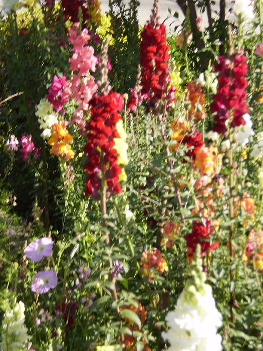Landscape Photograph - Flowers In Garden by Munir Ahmad