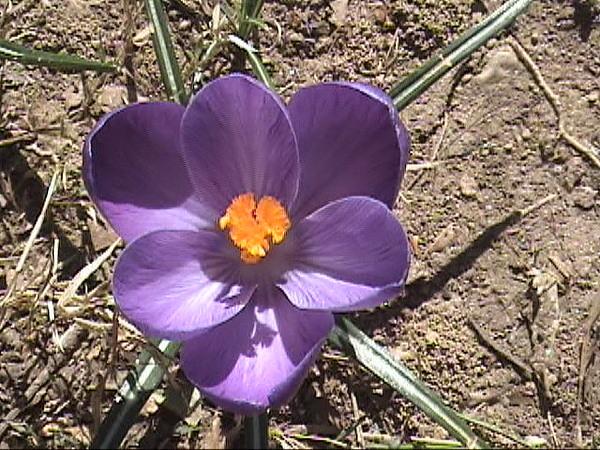 Washington Photograph - Flowers In Spring by Haydee Jaramillo
