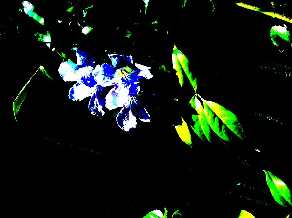 Pink Flower Photograph - Flowers In The Dark by Douglas Kriezel