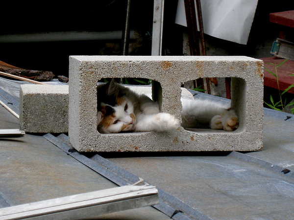 Funny Cats Photograph - Fluffy In  A Block by Ivan Rijhoff