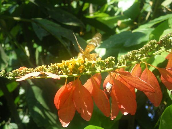 Nature Photograph - Flutter by Sarah Ann Henderson