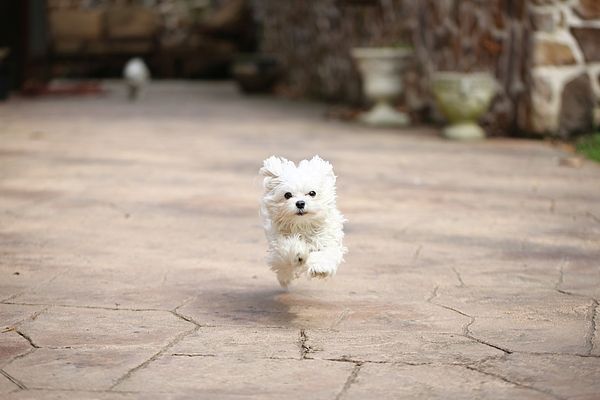 Horizontal Photograph - Flying Dog by moments caught Photography