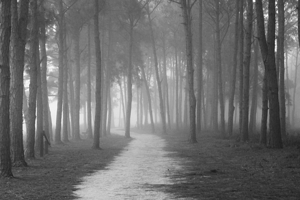Fog Photograph - Fog In The Forest by Gary Bydlo