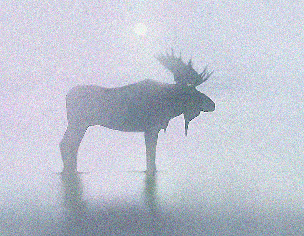Landscape Painting - Fog Moose by Robert Foster