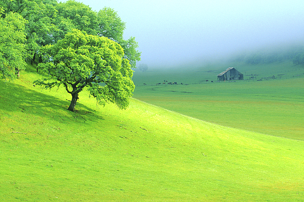 Agriculture Photograph - Foggy Morning In The Valley by Eggers Photography