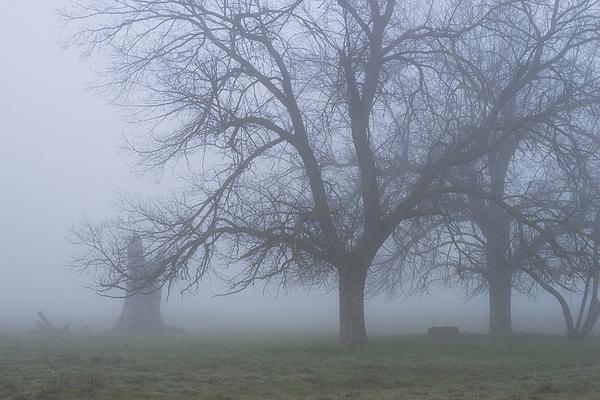 Fog Photograph - Foggy Morning by Randy Bayne