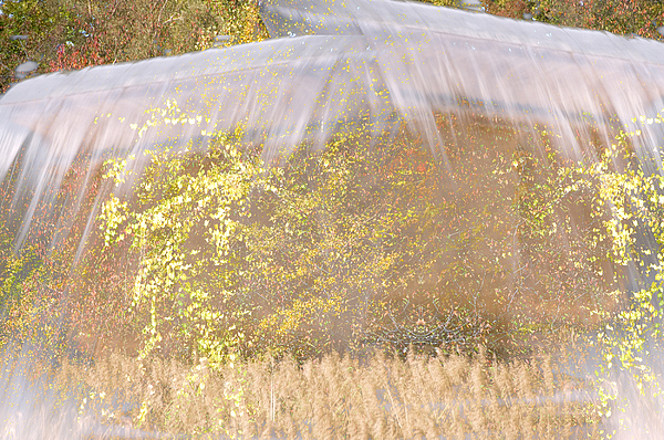 Abstract Landscape Photograph - Fontaine Aux Fleurs by Mary Mansey