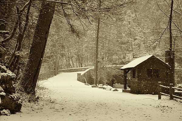 Wissahickon Photograph - Forbidden Drive In Winter by Bill Cannon