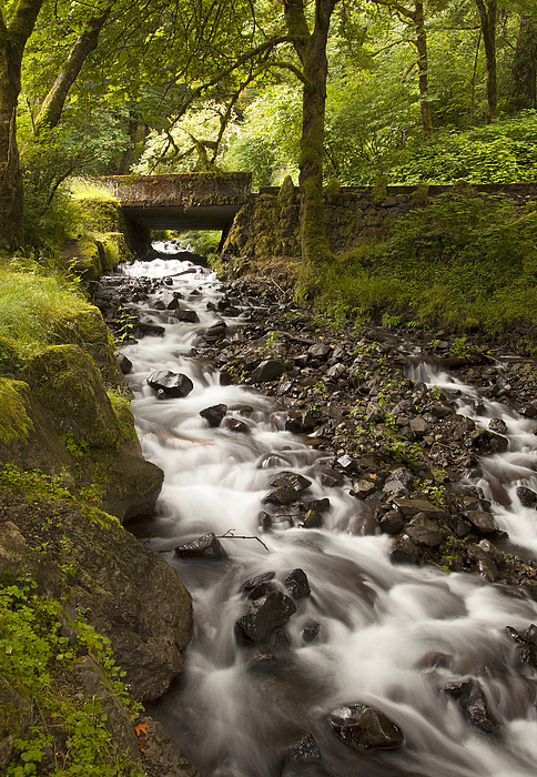 Waterfall Photograph - Forest Bridge - Columbia River Gorge by John Gregg