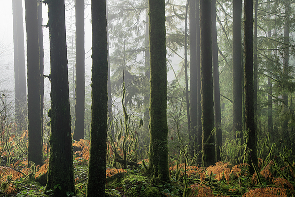 Forest Edge Photograph by Adam Gibbs