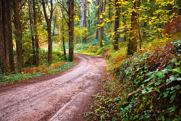 Autumn Photograph - Forest Footpath by Carlos Caetano