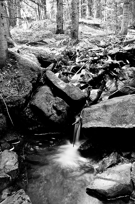 Rocky Mountain Photograph - Forest Stream In Black And White by James BO  Insogna