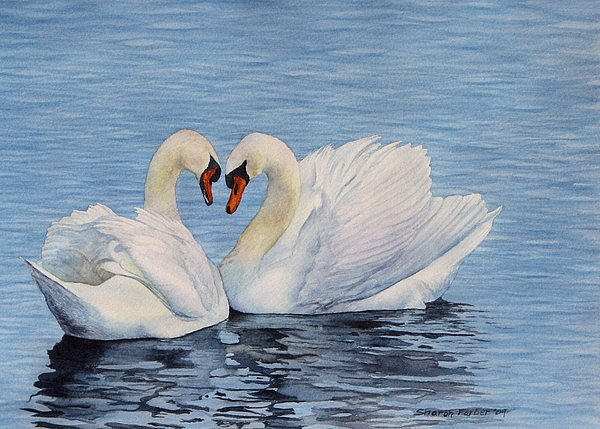Swans Painting - Forever Swans by Sharon Farber