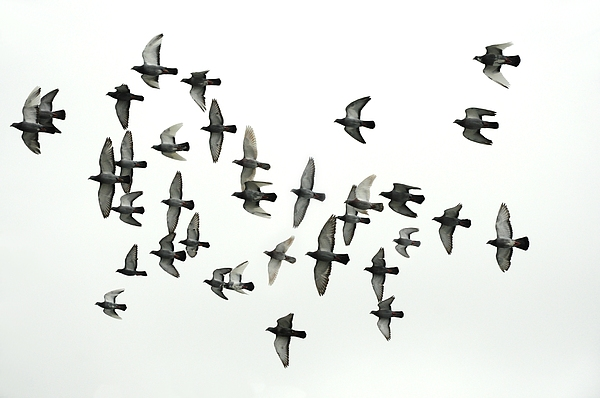 Bird Photograph - Formation by Hans Kool