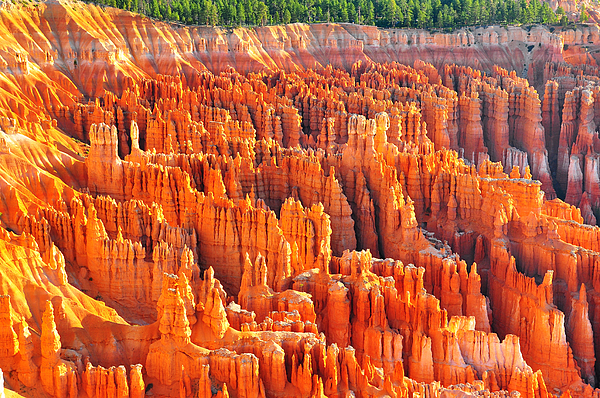 Bryce Photograph - Formations At Bryce Canyon Ampitheater by Jay Mudaliar