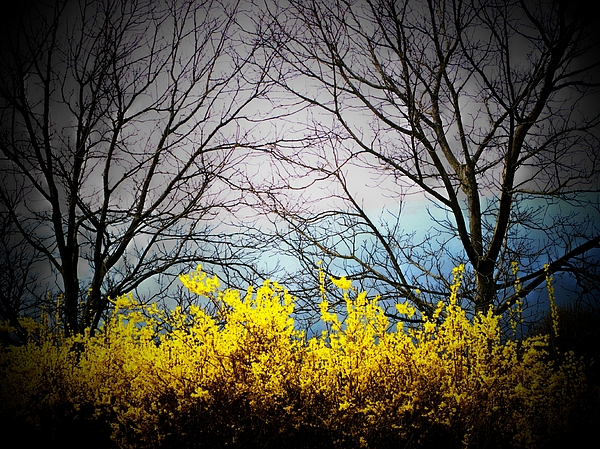 Virginia Photograph - Forsythia By The Mountains by Joyce Kimble Smith