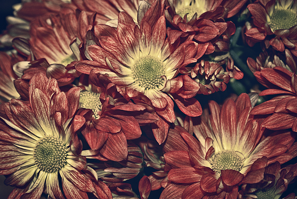 Daisies Photograph - Foulee De Petales - 04b by Variance Collections