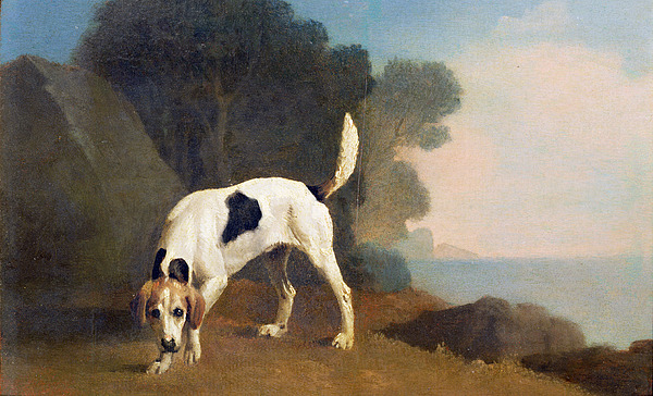 Foxhound Photograph - Foxhound On The Scent by George Stubbs
