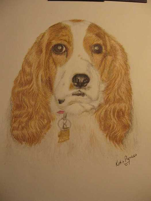 Dog Drawing - Freckles by Kathie Papasso