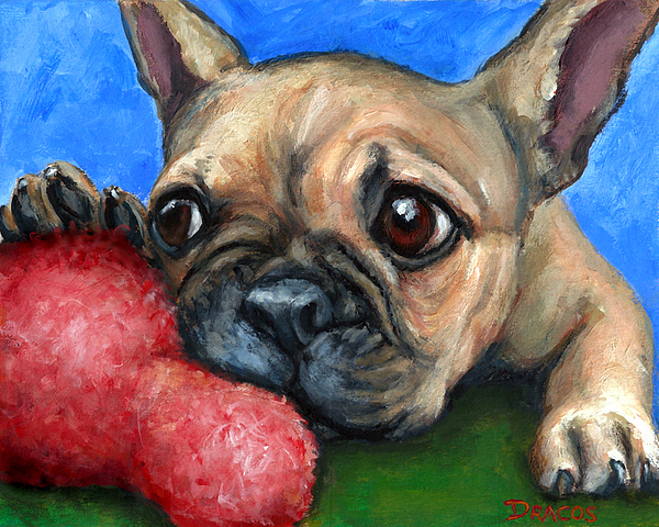 Dottie Dracos - French Bulldog Puppy with Toy