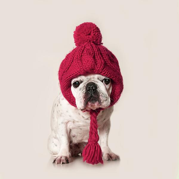 Square Photograph - French Bulldog by Retales Botijero