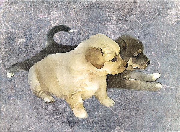 3d Photograph - Friends Forever  by Svetlana Sewell