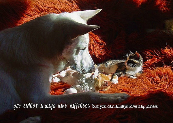Dog Photograph - Friendship Quote by JAMART Photography