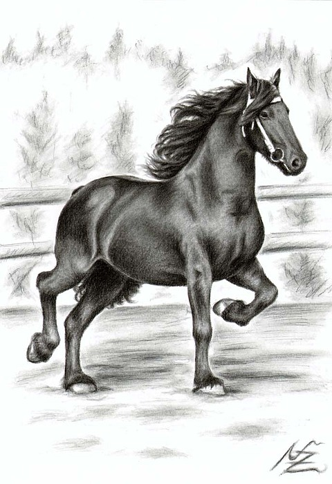 Horse Drawing - Friesian Horse by Nicole Zeug