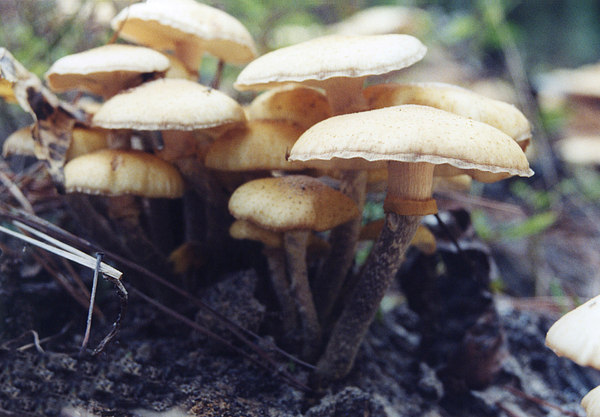 Mushrooms Photograph - Frills And Trills by Jan Amiss Photography