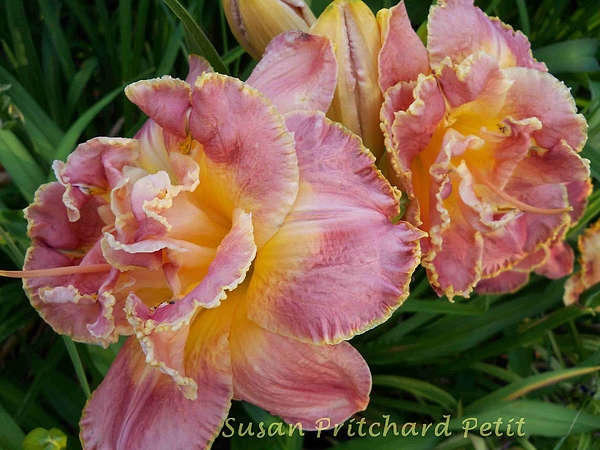 Nature Photograph - Frills by Sandy Collier