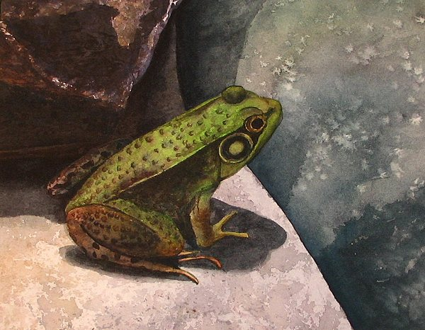 Frog Painting - Frog by Sharon Farber