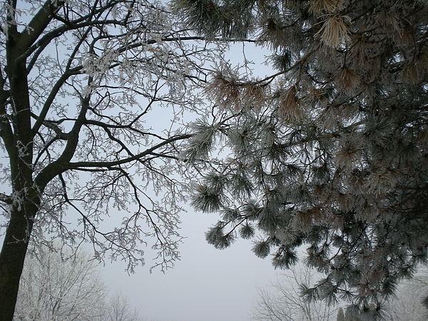 Cold Photograph - Frozen Air by Shigeo Akiyama