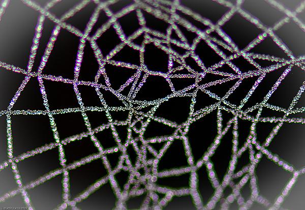Photographs Photograph - Frozen Dew by Jim Harris