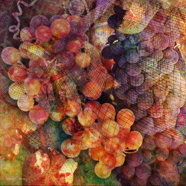 Grapes Digital Art - Fruit Of The Vine by Barbara Berney