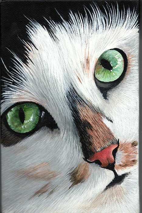 Cat Painting - Funny Face by Diane Deason