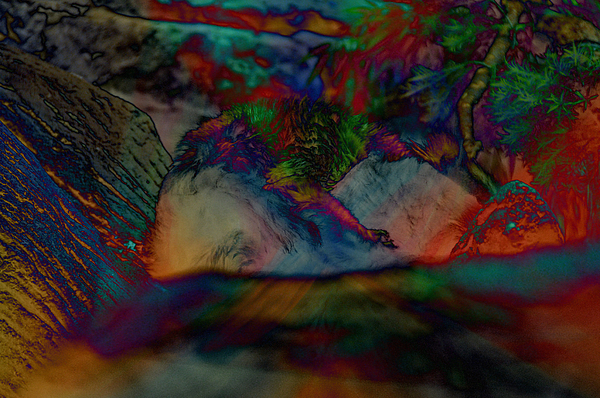 Colorful Photograph - Furred Fiend by John Ricker
