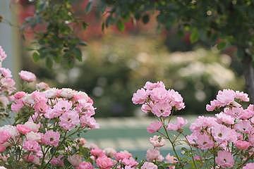 Pink Flowers Photograph - G0798 by Takuo Hirata